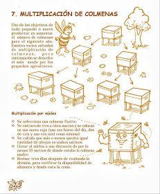 La Familia de la Apicultura - The Beekeeping of Family: Manual Apícola Ilustrado - Beekeeping Illustrated Manual. Drone Bee, Beekeeping For Beginners, Bee Swarm, Raising Bees, Bee Do, Queen Bees, Bee Keeping, Biology, Harvest