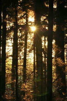 Trees by Katrin Fröhlich