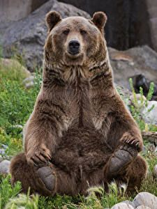I love this pose. Bear Images, Bear Photos, Bear Pictures, Animal Pictures, Ours Grizzly, Grizzly Bears, Photo Ours, The Bear Family, Cute Baby Animals