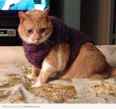 He's often cold, so I crocheted him a sweater. - goaww.com