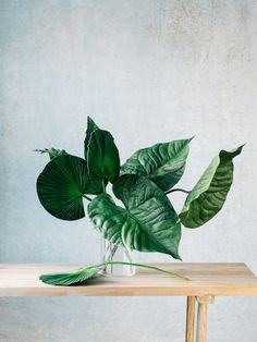 a variety of tropical leaves are displayed in a vase on a wood table