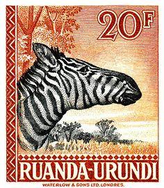 Antique 1942 engraved postage stamp depicting a zebra in the African savannah and issued by Ruanda-Urundi. zebra,Rwanda,ruanda,fauna,africa,safari,savannah,antique,postage,stamp