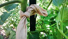 6 Garden Hacks That Reuse Nylon Stockings