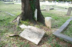 example of a hungry tree by kathleen walsh, via Flickr