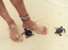 ♥I like turtles!