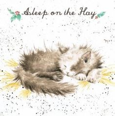 Christmas Artist Greeting Card Country Set Christmas - Asleep on the Hay- Sleeping Brown & White Cat Watercolor Animals, Watercolor Paintings, Watercolours, Cat Celebrating, Acrylic Painting Inspiration, Different Forms Of Art, Wrendale Designs, Lovely Creatures, Christmas Scenes