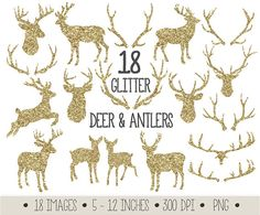 Stunning set of 18 high quality gold glitter antlers, deer, fawn, deer bust and raindeer clip art images.  These golden deer and antler clip