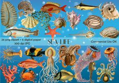 Sea clipart, digital download, instant download, fish clipart, scrapbook sea life, scrap CU, vintage sea, sea life png, sea background shell - pinned by pin4etsy.com