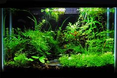 planted aquarium tank...has excellent advice for getting started.
