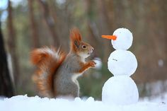 Photographer captures squirrels operating cameras and building snowmen. #nature #wildlife #animals