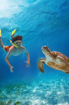 Sea Turtle Tours Fort Lauderdale