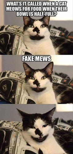 Pun cat. I like it.