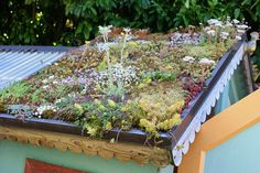 Going Green: Planting a Living Chicken Coop Roof -- Community Chickens