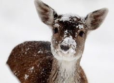 Oh deer, it looks like it's snowing out :))) #deer #winter #animals #wildlife #snow #Christmas