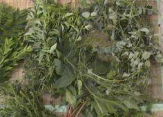 lucumiyoruba41 Plants, Beautiful, Plant, Planets