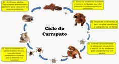 Dicas Boas pra Cachorro !: COMO ACABAR COM OS CARRAPATOS DO CACHORRO E DO AMBIENTE