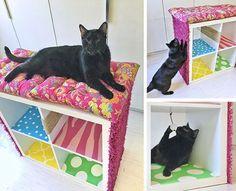 5 Best DIYs that your Cat will Love
