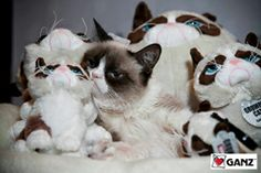 Grumpy Cat looks more grumpy than usual among his grumpy toys