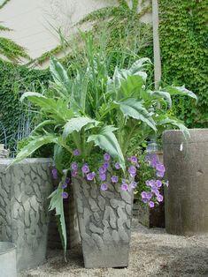 Cynara cardunculus, or cardoon, is also known as an artichoke thistle.