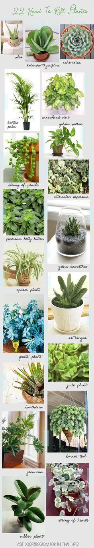 22 plantas que são difíceis de matar!