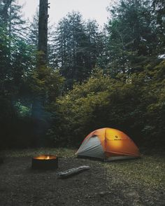 Forest camping!