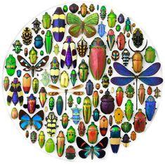 なんて魅惑的。蝶や甲虫など様々な昆虫を整然と並べたとても美しいアート作品