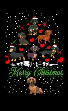 Celebrating a Merry Christmas Mini Dachshund, Dachshund Puppies, Weenie Dogs, Daschund, Christmas Animals, Christmas Dog, Christmas Cards, Dog Wallpaper, Christmas Wallpaper