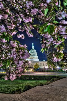Cherry Blossoms in Our Nations Capital (Part 2) by Thomas Falkowski, via 500px