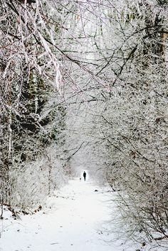 The tunnel of snow, country side close to Brussels, in Sterrebeek