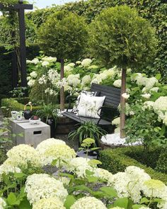Hydrangeas, Roses and Agapanthus in full bloom A favorite combination #hydrangea #summerday
