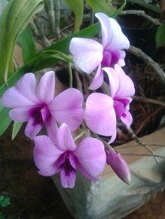 Bom dia orquidea do jardim.