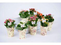 Calandiva in hartie - Flori de vara - Flori in ghiveci - Mărturii nuntă - Nunta - Evenimente