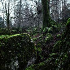 Kim Sokola is an award winning photographer. Earth, Landscape, Plants, Scenery, Landscape Paintings, Planters, Corner Landscaping, Plant, Planting