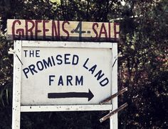 The Promised Land Farm  #greens