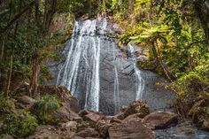 El Yunque National Forest Waterfall by Javier Art Photography on @creativemarket