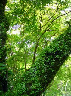 奈良市 正暦寺(しょうりゃくじ) モミジの緑 : 魅せられて大和路