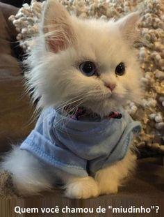 Nós sabíamos que você estava esperando por mais um dia de gatinhos!                                                                                                                                                                                 Mais