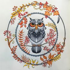 This Stunning Owl Illustration From Enchanted Forest Was Instantly Special In My Eyes I Thought About Where Wanted To Go With For A While And