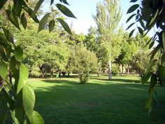 Jardines del Parque Cruz Conde