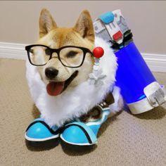 Even More Overwatch Doge Cosplays! (Updated)