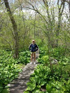Norman bird sanctuary Middletown Ri, Rhode Island History, City By The Sea, Newport Rhode Island, East Coast, Day Trips, Norman, Walks, Explore