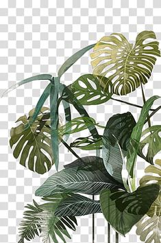 Best Garden Plants And Planting Plant Painting, Plant Drawing, Leaf Drawing, Watercolor Leaves, Watercolor Paintings, Leaf Illustration, Leaf Background, Plants, Logos Retro