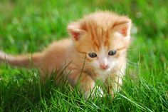Kittens, cats, chatons, chats. I love them!