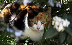 Curiosity   #PhotoLanda #gato #cat #ParqueDeLasCiencias #granada #andalucia    https://flic.kr/p/S24rFs