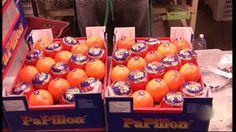 sinaasappels waar komen ze vandaan filmpje