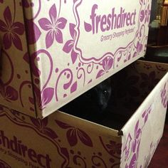 Hey @FreshDirect, your boxes make great hiding spots for my #cats.