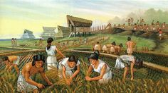 Rice revolution during Yayoi times