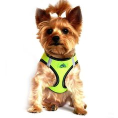 Doggie Design Top Stitch Iridescent Green American River Choke Free Dog Harness on Dog