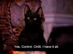 """Funniest Salem The Cat Quotes From """"Sabrina, The Teenage Witch"""" - World's largest collection of cat memes and other animals Cat Quotes, Movie Quotes, Sabrina Cat, Salem Cat, Salem Saberhagen, The Awkward Yeti, Arte Indie, Cyberpunk, Sabrina Spellman"""