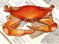 Boiled Crab Painting  - Boiled Crab Fine Art Print from June Howell, Fine Art America